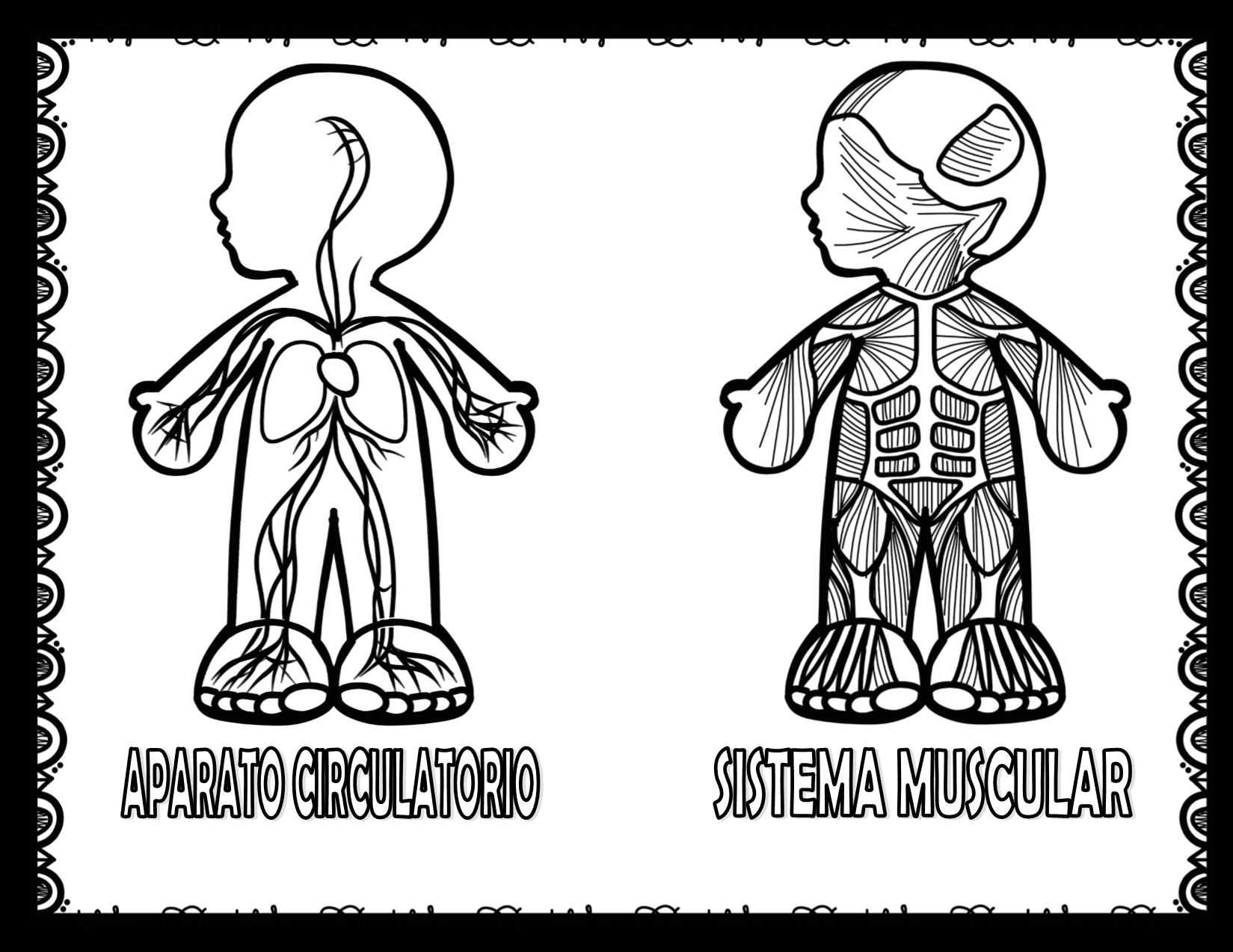 Estupendos diseños de los sistemas y aparatos del cuerpo
