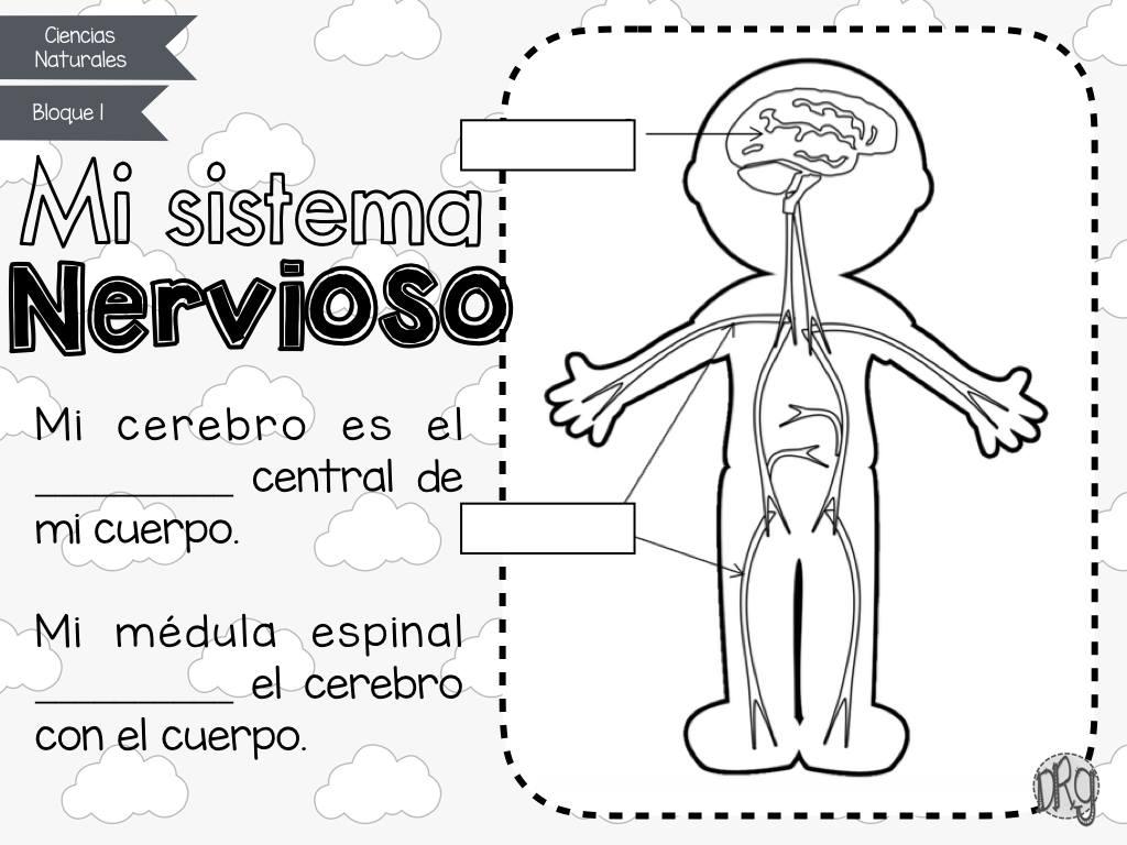 Cuadernillo cómo funciona mi cuerpo, aparatos y sistemas del cuerpo ...