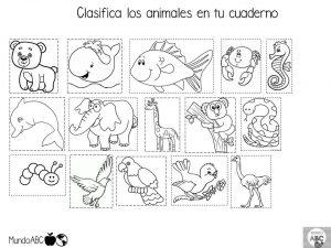 clasificacion de animales en preescolar
